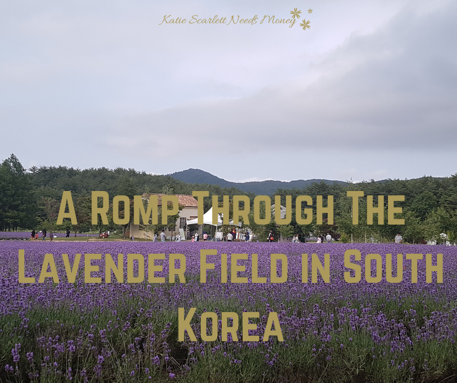 Romp Through the Lavender Field