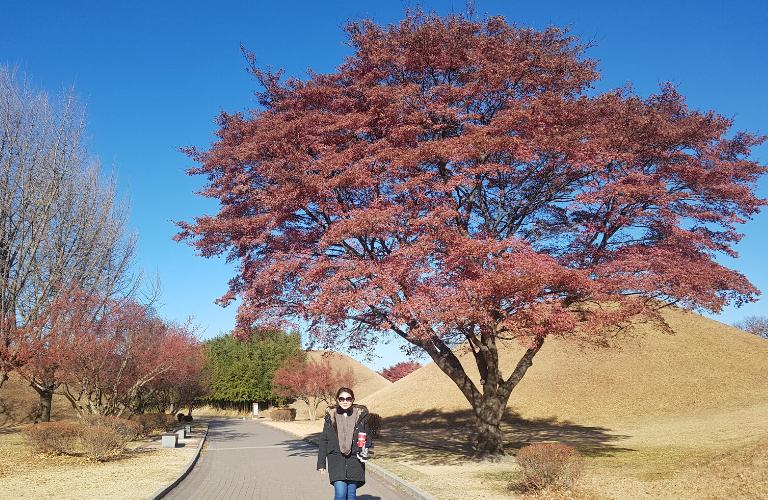 Daereungwon in fall